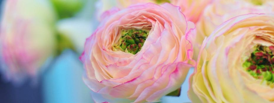 花屋 近く の 京都府京都市左京区の花屋 らぶあんROSEにフラワーギフトはお任せください。 当店は、安心と信頼の花キューピット加盟店です。 花キューピットタウン