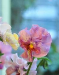 寒いけど春のお花たち…